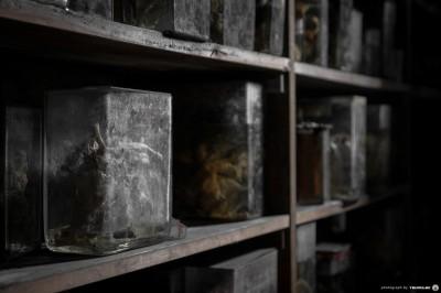 Horror Labs 6