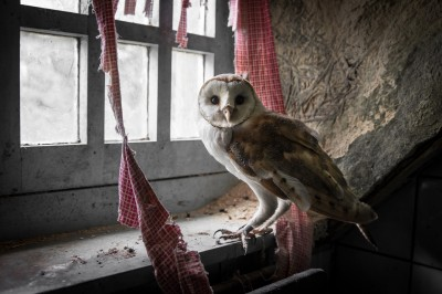 The Hoarder & The Owl 5
